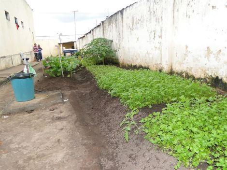 Hortaliças cultivadas na ressocialização // Créditos: Divulgação